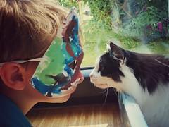 hallo fremde katze...! (bauingenieuse) Tags: katze nof norwegischekaldkatze maske kind junge boy begegnung meeting gettogether nase nose gegenüber freunde friends bauingenieuse 2017 handyfoto xperia sony