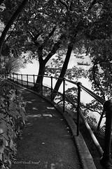 Summer Ramble (CVerwaal) Tags: blackandwhite centralpark ramble rowboats thelake newyork ny usa