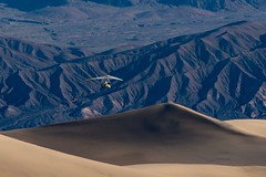 Power Gliding over the Sand Dunes Landscape Geology Nature Extreme Terrain Mountain Scenics Physical Geography Volcanic Landscape Beauty In Nature Travel Destinations Arid Climate Outdoors Sand Dune Sand Adventure Day Desert One Person Snow Animal Themes (Jim Wiltschko) Tags: landscape geology nature extremeterrain mountain scenics physicalgeography volcaniclandscape beautyinnature traveldestinations aridclimate outdoors sanddune sand adventure day desert oneperson snow animalthemes deathvalley mesquiteflatsanddunes