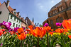 Flowery Riga