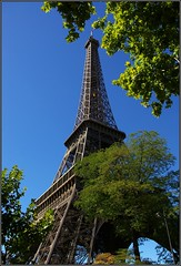 The Eiffel Tower appears through the leafy, green_