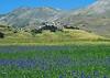 Sottotono - Undertone (Ola55) Tags: italy umbria ola55 terremoto earthquake fioritura flowers castellucciodinorcia norcia parcodeimontisibillini