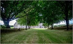 Kilcrea Friary (EoinGardiner) Tags: franciscan friary kilcrea cork ballincollig ireland trees avenue 1465 muskerry lord