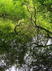 Reflecting trees (myraemery) Tags: lake trees reflections water