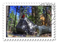 Yosemite Stamp (fishmonger45) Tags: yosemite dillos squirrel parrots photoshop photomatix hdraddicted hdr