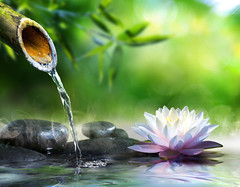 33104625_ml (worldclassclubs) Tags: zen bamboo spa water garden stones lily lotus background nature fountain flowing stream meditation green culture concept serenity japanese beauty peace closeup pond lake relax massage waterlily foliage blur traditional asian