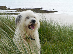 Saltainis, Barra (Niall Corbet) Tags: scotland outerhebrides hebrides barra sea coast dog sheepdog