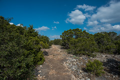 Trail - Government Canyon State Recreation Area - Bexar County - Texas - 12 February 2017 (goatlockerguns) Tags: live oak government canyon state recreation area bexar county texas usa unitedstatesofamerica south southern southwest nature natural woods trail starburst forest
