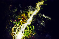 Night Nova (Opofolof) Tags: night light nova green yellow white dark bright contrast greenery flower flowers shrub shrubbery lightbulb lightbeam bulb colour color luminous brush garden photoshop photography photo black sun