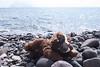 abbandono (Leonardo Santetti) Tags: sicily sicilia alicudi isola eolie aeolian italy peluche cane dog seaside spiaggia mare volcano island rocks quotidiano poesia