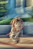 breakdancer-061.jpg (Yvonne Rathbone) Tags: blurry blur technical 1855mmf3556gvr d5500 icm abstraction abstract movement outdoor ucberkeley cal nikon breakdance