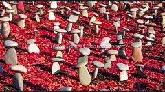 Exterior daytime picture of mushroom stone garden in the fall in Napa Valley with fallen red leaves in background (Travis Powers Photography) Tags: sculpture sculpturegardens sculpturegarden rocks stone granite leaves