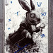 Squared eye rabbit - #NarvaloConnection