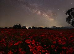 Una notte di Maggio (silvietta b) Tags: milkyway papaveri natura stelle cielo vialattea notte viterbo