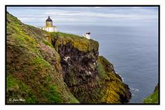 The Lighthouse - 2017-07-07th (colin.mair) Tags: abbs lighthouse birds coast rocks saint saintabbs sea stabbs cliff coastline edge seascape sony ilce6000