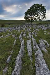 Malham Cove (Carl Mick) Tags: landscape rocks trees sunset yorkshire ngc penninesway robferrol leefilters davehill