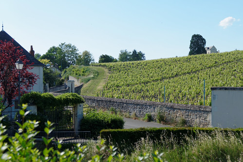 Vignoble de Chinon