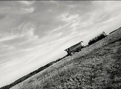 Les Moissons du Ciel : Quatro - Hors Collection (théorieartistiquedusoleilhabité) Tags: farm ferme noiretblanc blackandwhite foin cereales champs campagne tracteur moissoneuse moissons lesmoisonsduciel moissoneusebateuse recolte