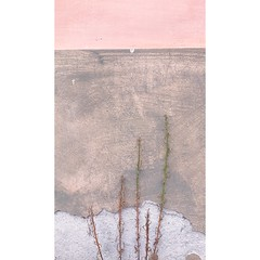 Wall+life (Fawn Graphics) Tags: nature shadesofpink softphotography softtones archilovers life sweet conceptualphotohraphy conceptualimage pinkwall pink wall minimalove minimalism minimal