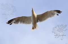 seagull2017_08.jpg
