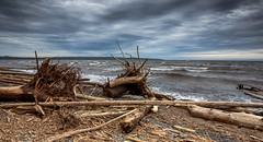 East coast of canada (zilverbat.) Tags: canada travel timelife nature availablelight clouds zilverbat urbannature beach tripadvisor visit image wallpaper canon eastcoast world waterfront water lee outdoor dead trees driftwood wood rough