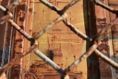 BIRD DOG (1984) (TheGraffitiHunters) Tags: 84 1984 graffiti graff moniker streak markal freight train tracks benching benched boxcar bird dog