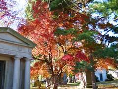 P1060583 (amiterangi1) Tags: woodlawncemetery autumn cemetery woodlawn
