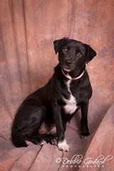"""Molly"" female - Looking for Furever Home (ms godard) Tags: debbiegodard nikond700 escc barc animals adoption rescue baldwin humane society"