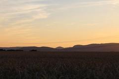 Sunset (LuckyMeyer) Tags: sun sunset summer walk sonne sommer sonnenuntergang spaziergang abend landscape night field