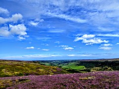 COAST TO COAST WALK 2015 (pajacksonartist) Tags: wainwright coasttocoast glaisdale moor moors great fryup dale north york national park yorkshire england purple heather