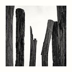 geknickte Holzbuhnen (Ralf Barenbruegge) Tags: zeeland niederlande holland strand buhne sw sony rx100iii schwarzweis blackandwhite