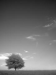 IR Tree at Nienhuis Park (tommyr68) Tags: ir infrared fujifilm finepix e550 oklahoma brokenarrow bw blackandwhite digital tree sky nienhuis park
