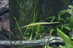 IMG_0671 (Lilly Wendel) Tags: newportaquarium newport kentucky usa