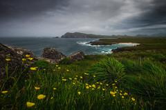 Dingle Peninsula II (steinmetznicolas) Tags: 2017 dingle irlande juin ireland peninsula slea head drive sea seascape landscape cloud flower fleurs paysage nikon d610 1635