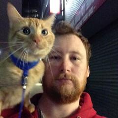 Seriously cool cat #catsofinstagram #cat #catwalk #nyc #cats #catdad (MrPatrickHenry) Tags: instagram flickr patrick henry mrpatrickhenry new york project 365 life