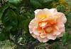 x20170713_150145 (Lovelli) Tags: roper road july 17 flowers
