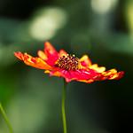 selected flora thumbnail