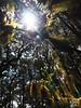 P7162111 Ixtlan de Juarez - Miyazaki-like forest (Ludovic Celle) Tags: mexico oaxaca juarez ixtlan sierra norte tree light canopy miyazaki mononoke nausicaa