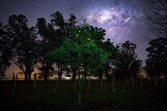 When we stop the madness ... (karinavera) Tags: travel sonya7r2 view longexposure night argentina pampa buenosaires campo fruits field milkyway trees stars sky