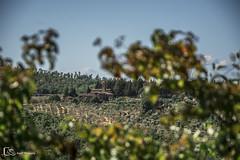 La Toscana (Italia) (M. Ángeles Cuenca) Tags: toscana italia tuscany italy campo arboles arbol paisaje landscape