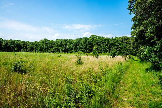 Fisher Oak Savanna Nature Preserve - July 19, 2017