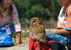 The awe (Maria Salvador) Tags: aves badocapark corujas crianças birds children owl