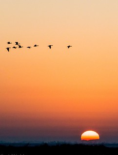 EyeEm Selects Sunset Flying Orange Color Bird Beauty In Nature Animals In The Wild Animal Themes Nature Outdoors Sky Scenics Silhouette No People Animal Wildlife Mid-air Clear Sky Large Group Of Animals Day