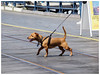 The Excitable Dog (jason_hindle) Tags: dogs unitedkingdom olympusvf4 olympus40150 olympuspenep5 southportpier southport