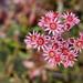 close up Pink flower