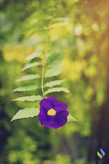 Violet flower (vibrancefotografy) Tags: baby beach berlin birthday blue bw california canada canon car cat chicago city concert dog europe family festival flower food france friends fun garden graffiti green holiday india landscaarchitecturepe light macro art me museum music nature new newyork night nikon paris park party people portrait red sea show sky snow spain spring stlouis street summer sunset texas travel tree trees trip uk usa vacation vibrancephotography washington water wedding winter zoo