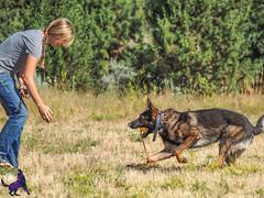 P7150428 (Songdog Studios) Tags: green dog neumond womensretreat 2017 k9 schutzhund ipo