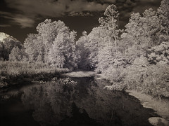 IR: Government Island 3 (dzmears) Tags: ir infrared trees water island forest pads swamp creek clouds reflection