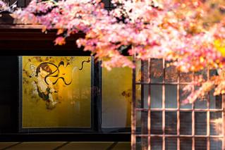 紅葉 - 建仁寺 / Kennin-ji Temple in Autumn