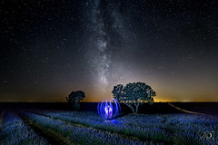 We are not alone. (DinoPozo) Tags: brihuega guadalajara lavanda longexposure milkyway spain españa lavender galaxy amazing amazingshot lovesspain nightshot nightscape night